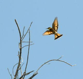 B2014.birds1702w