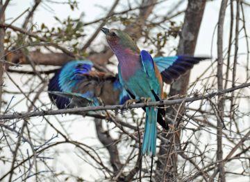 B2014.birds1843w