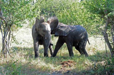 B2014.elephant4039w