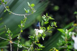 sey.birds.4