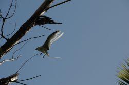 sey.birds.8